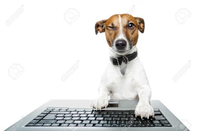 winking-typing-dog